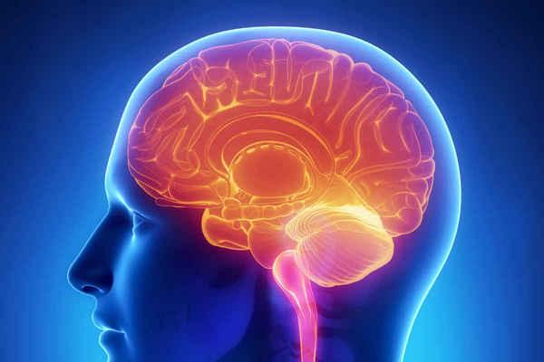 Cerveau humain : Stockage 10 fois plus important